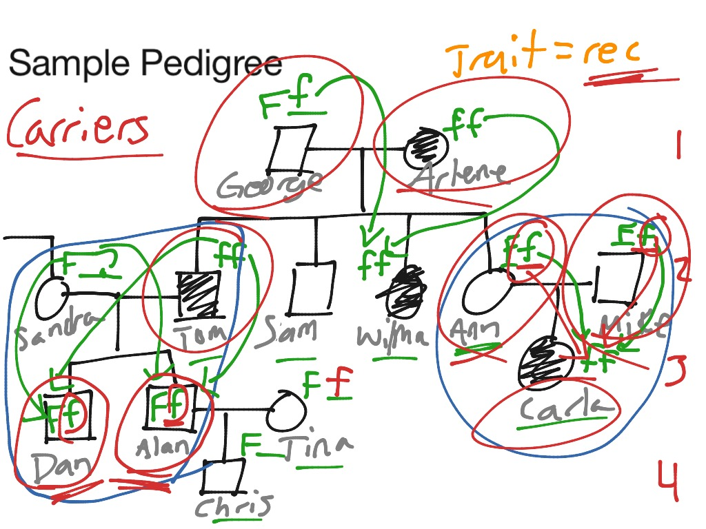 Showme pedigree chart for colour blindness most viewed thumbnail geenschuldenfo Images