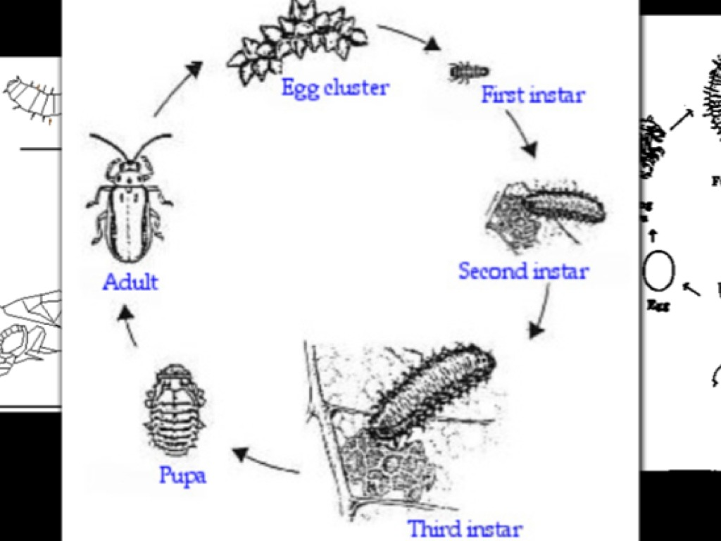 equine protozoal myeloencephalitis epm essay Our backyard is full of life  they are carriers of equine protozoal myeloencephalitis  an essay in christian sexual ethics.