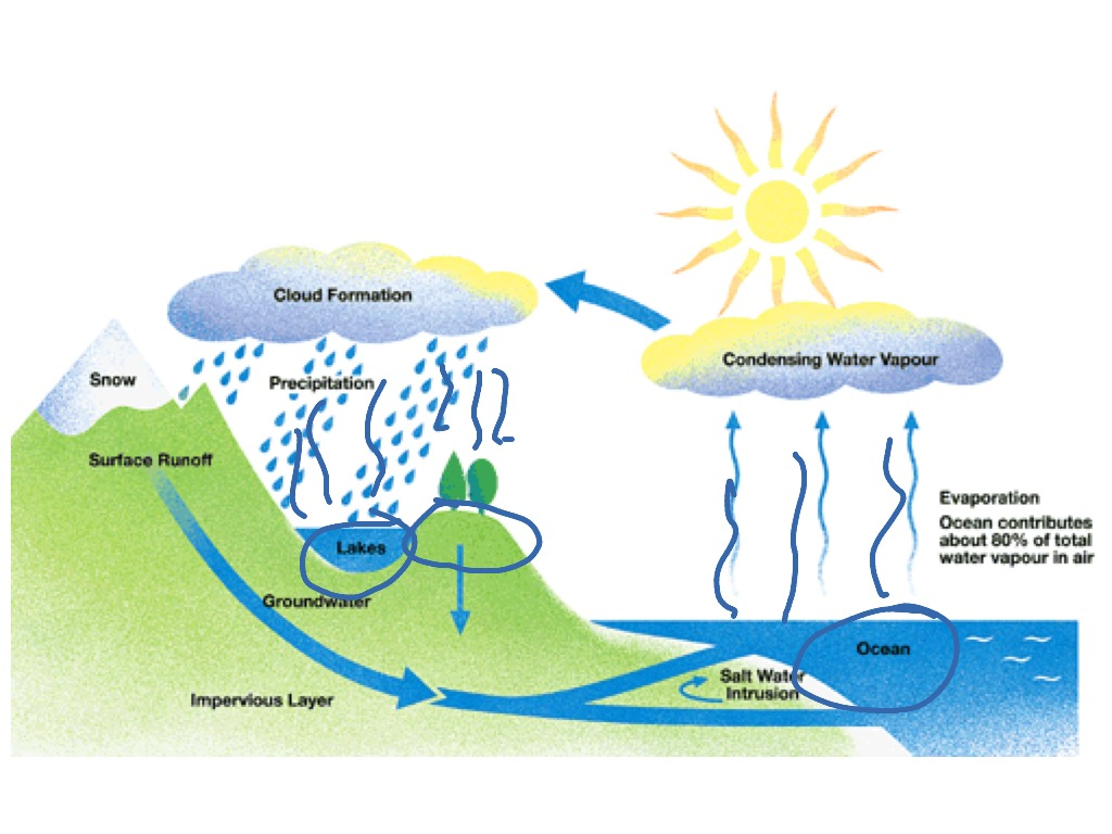 Water cycle for bio 1 science showme ccuart Image collections