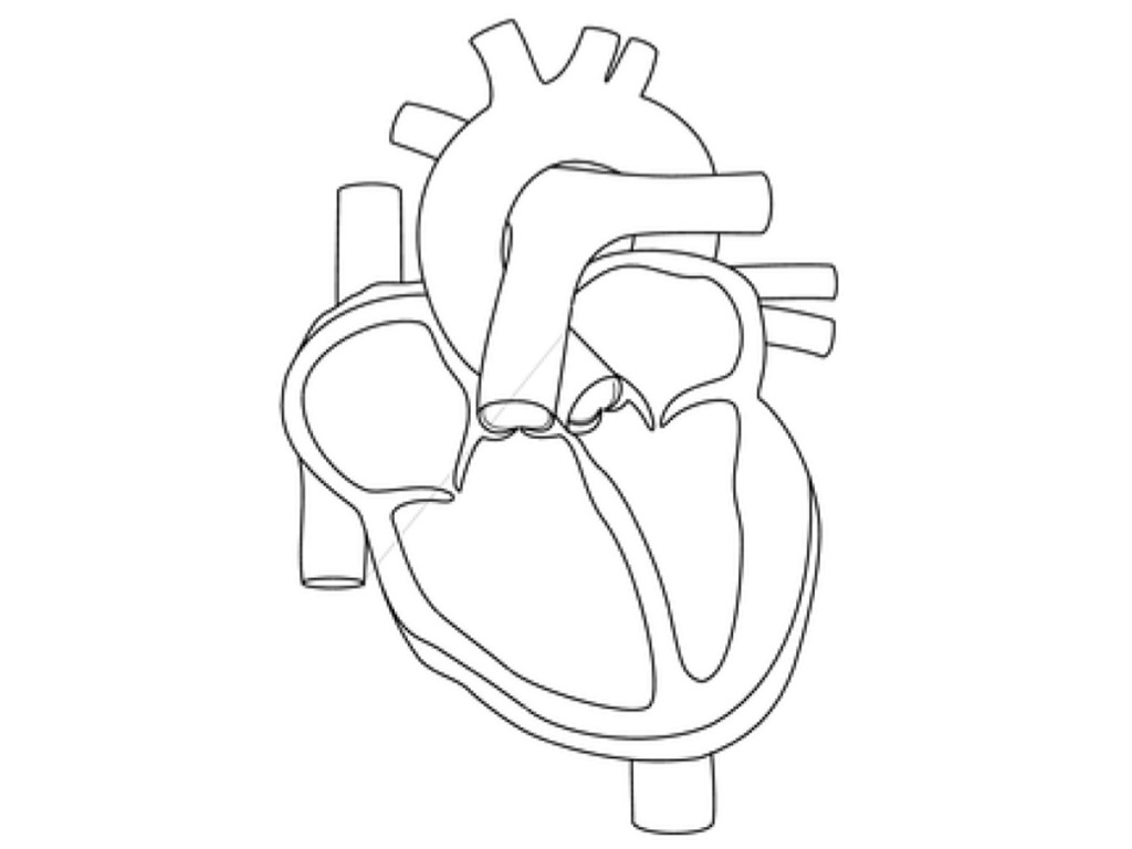 Blood flow through the heart | Physiology, Biology | ShowMe