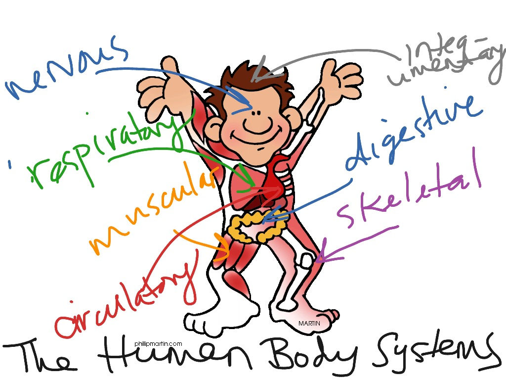 The human body systems | Science, Biology, anatomy, All ... | 1024 x 768 jpeg 164kB
