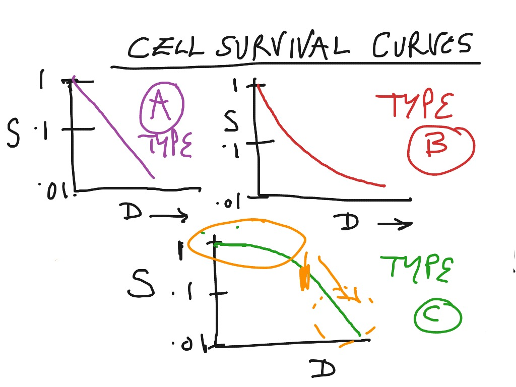Cell Survival Curves | Science, Radiobiology | ShowMe