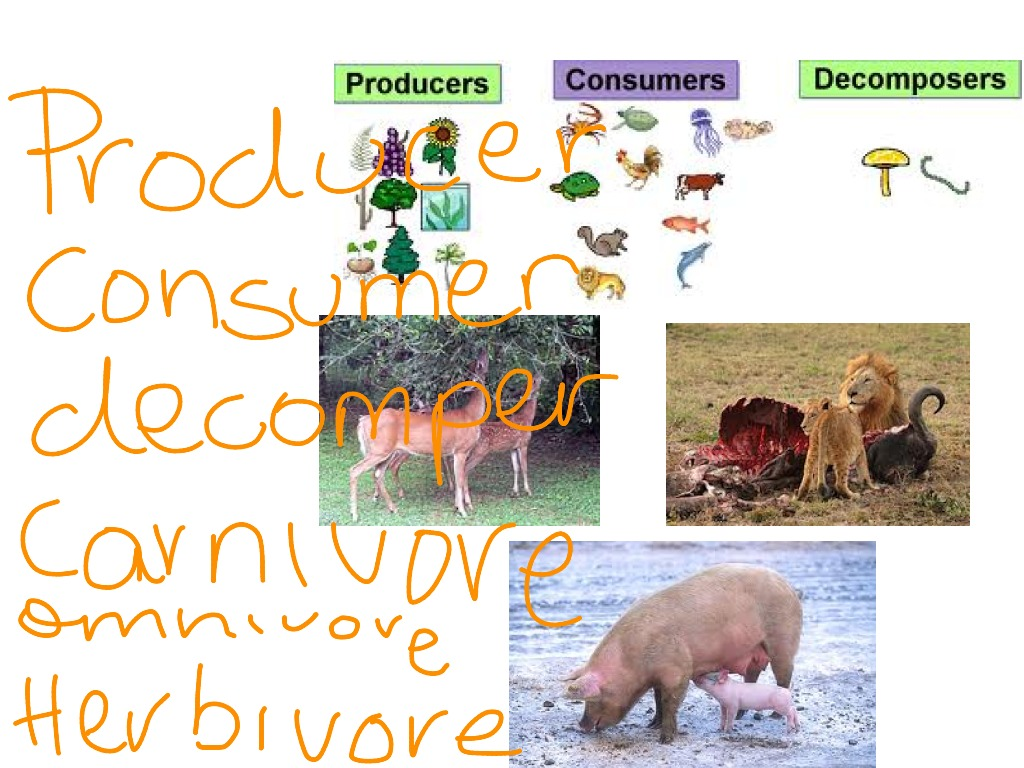 Showme Desert Food Chain With Producer Decomposer Consumer