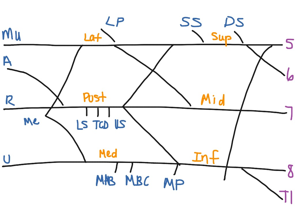 Showme nerves of the brachial plexus most viewed thumbnail pooptronica