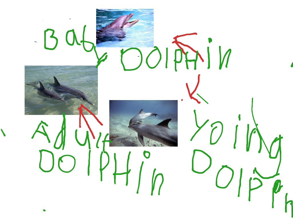 the dusky dolphin by geia thompson on prezi life