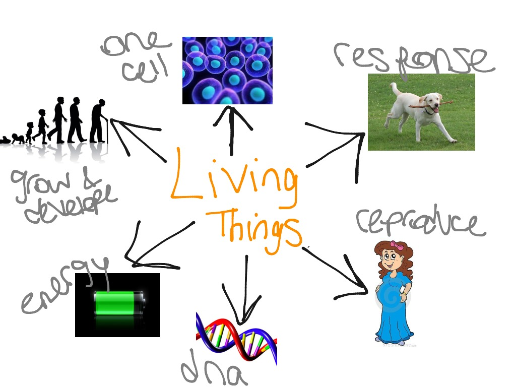 the characteristics and qualities of a living thing All living things have common traits, irrespective of plants and animals scroll  down this article to know more about these characteristics of living things.