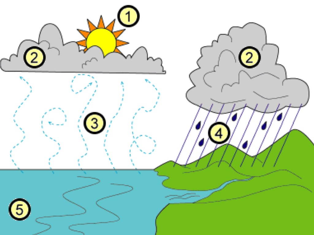 alessandro explains the water cycle | environment, water-cycle