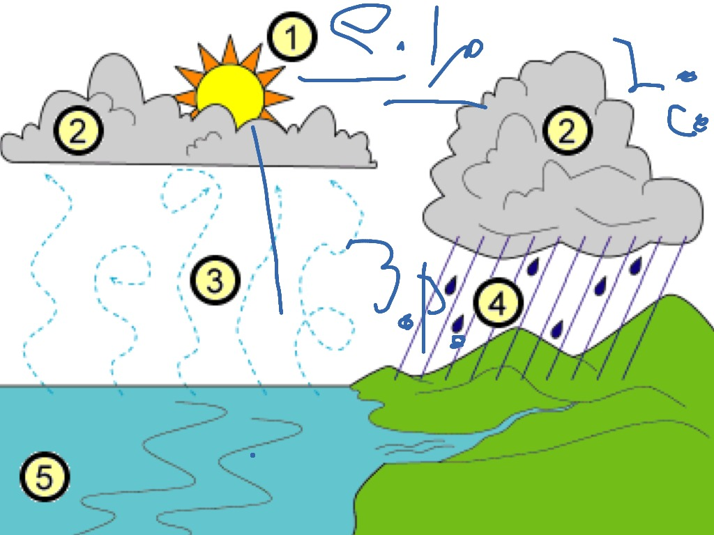 Alessandro explains the water cycle environment water cycle alessandro explains the water cycle environment water cycle science science science science science showme ccuart Choice Image
